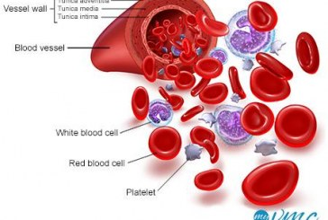 Blood diseases affecting human well being