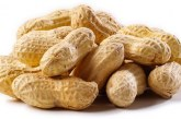 Peanut allergy could be beaten by building up tolerance, study finds